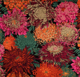 Japanese Chrysanthemum red