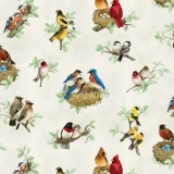 Beautiful Birds Song Birds Cream