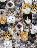 Packed Mixed Breed of Cats