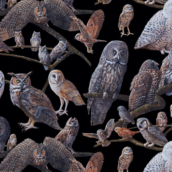 PŘEDOBJEDNÁVKA - Owls of North America Assorted Owls Black