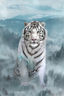 Call of the Wild - Ice Blue - Tiger
