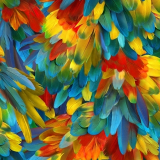 Call of the Wild Parrot Feathers