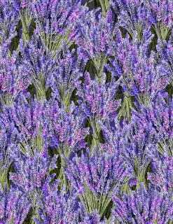 Packed Lavender